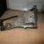 Кронштейн двигателя BMW E34 M50 1135948